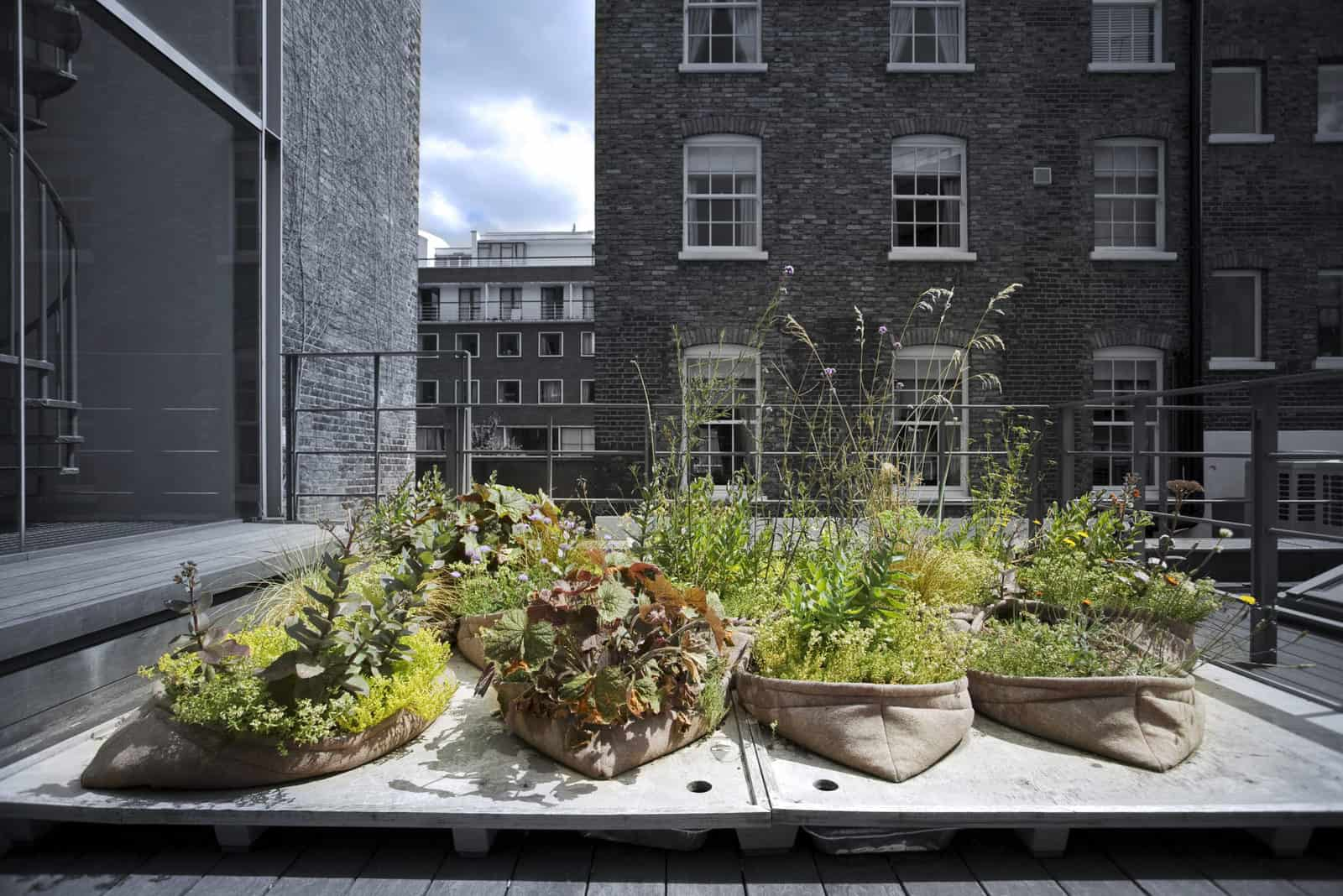DAM – Greening the City – Pocket Habitat (©Thomas Graham – Arup)