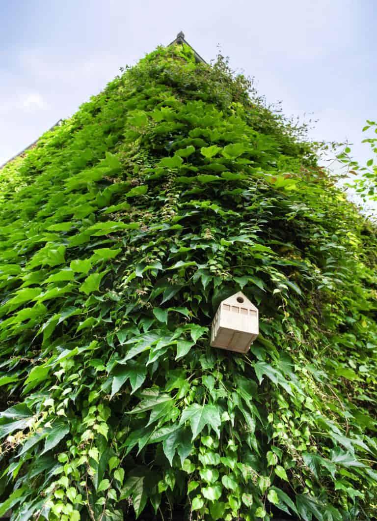 """Bauakademie """"Einfach grüne Welten bauen"""""""
