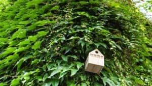 Abgesagt: Lehrkräftefortbildung / Grünes Klima – Graues Haus